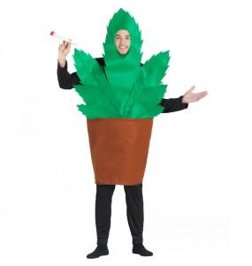 Fato de Pote com marijuana para homem